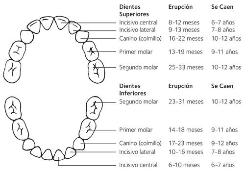 El cambio de dientes en los niñ@s